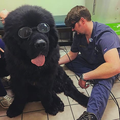 Pet Laser Therapy in Raleigh: Technician Gives Laser Therapy to Dog